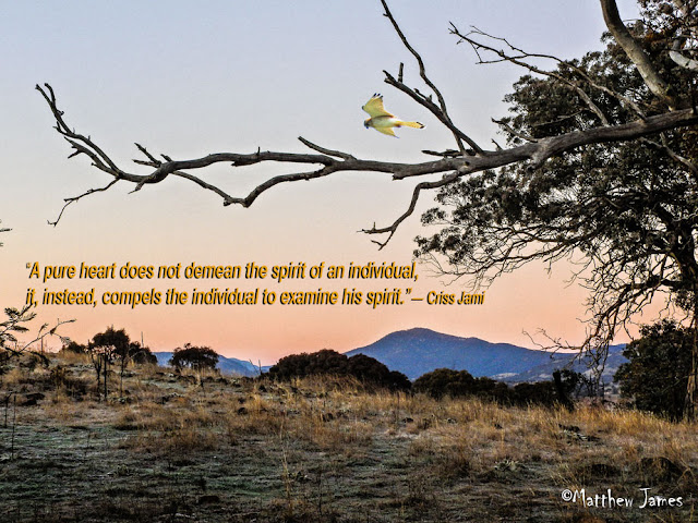 'A pure heart does not demean the spirit of an individual, it, instead compels the individual to examine his spirit' - Criss Jammi