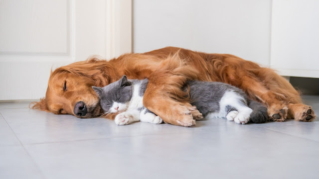 5 Reasons Why Cats Make Better Pets Than Dogs