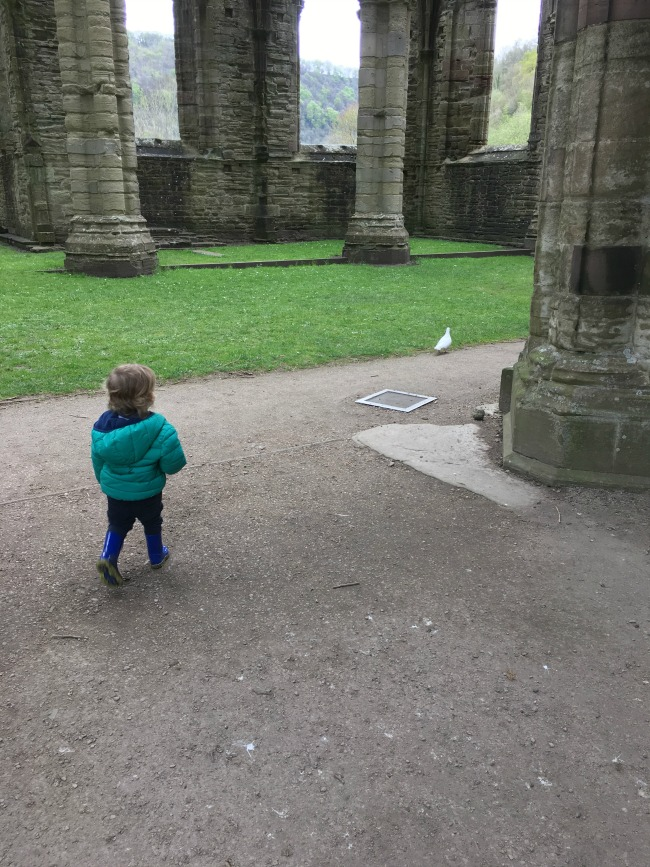 toddler amongst ruins chasing a white dove