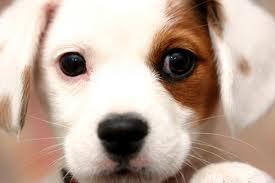 Foto tierna de cachorro
