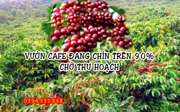 TRONG CAFE NGUYEN CHAT
