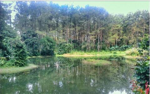 Telaga Kebak Wisata Air Ditengah Rimbunya Hutan Pinus