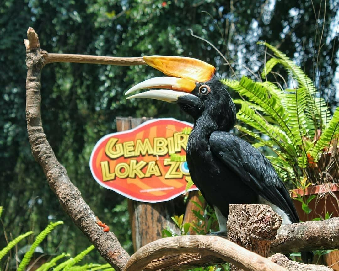 Harga Tiket Gembira Loka Zoo