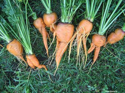 Παλιές ποικιλίες λαχανικών