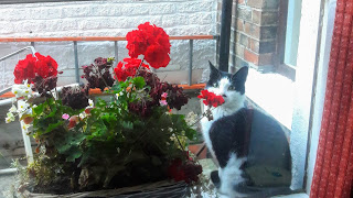 Cat sitting on a windowsill next to flowers