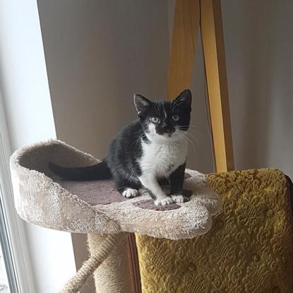 black-and-white kitten sitting on a paw-shaped cat shelf