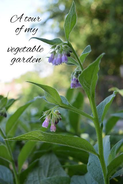 A tour in photos of my spring vegetable garden - Oak Hill Homestead