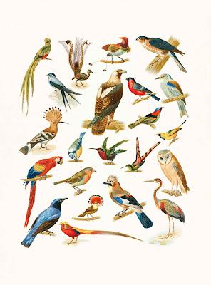 أهم اسماء الطيور في اللغة الانجليزية