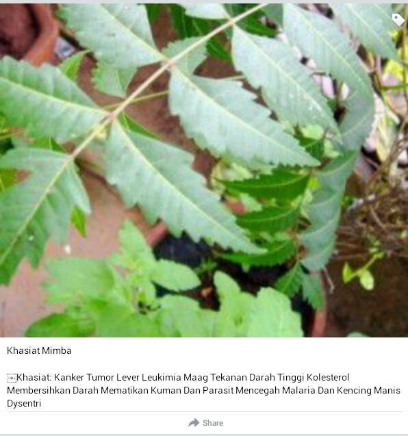 Bahan-bahan Obat Tradisional Yang Ada Di Sekitar Kita