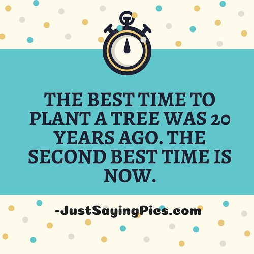 best-inspirational-thoghts-The-best-time-to-plant-a-tree-is-20-years-ago-the-second-best-time-is-now