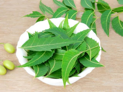 Surprising-Medical-Benefits-of-Neem-Herbs