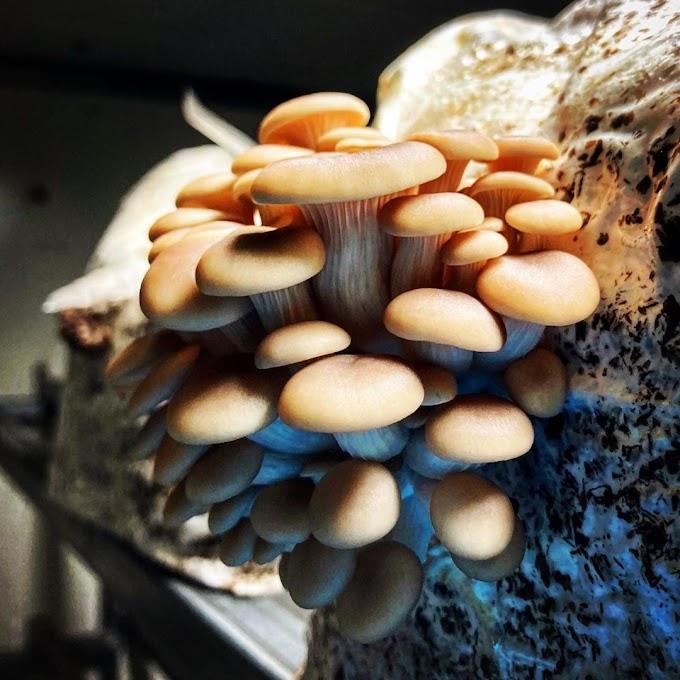 मश्रूम शेतीची संकल्पना | मश्रूम शेती व्यवसाय | Mushroom Training Maharashtra | Mushroom Farming Business