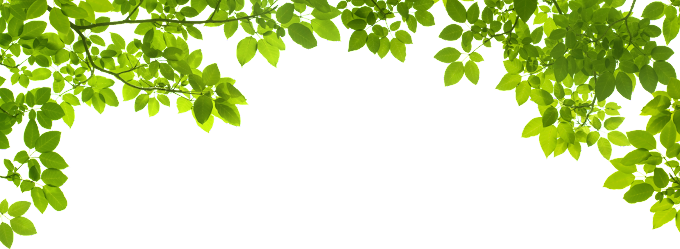 Leaf Green graphy, Green Leafs, border, branch, computer Wallpaper png