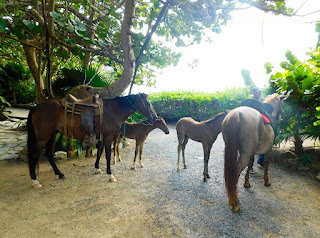 #payabay, #payabayresort, paya bay resort, horseback riding, horses, activity, fun,