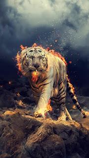 Contoh Wallpaper WA Harimau