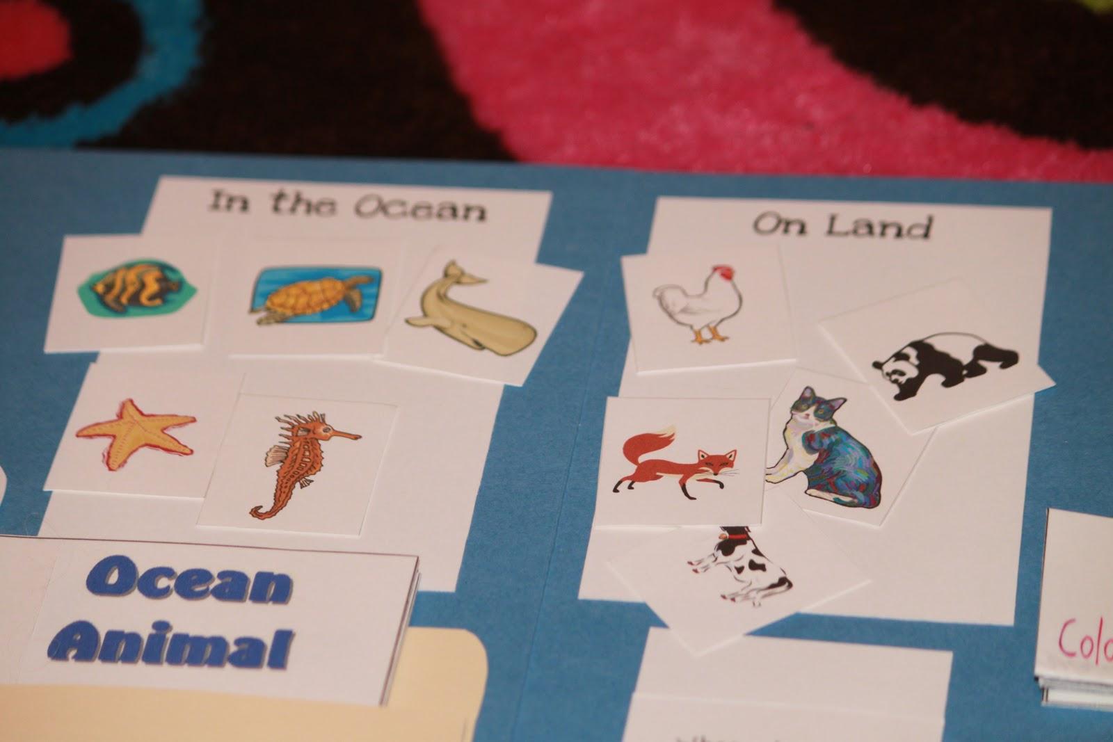 Miller Academy Sea World And Ocean Animals