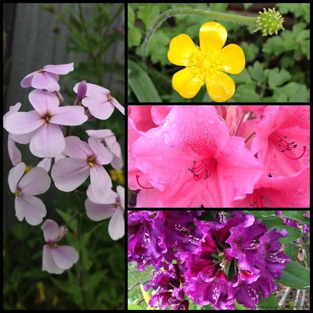 Jessica' Wonderful World Of Plants Angiosperms
