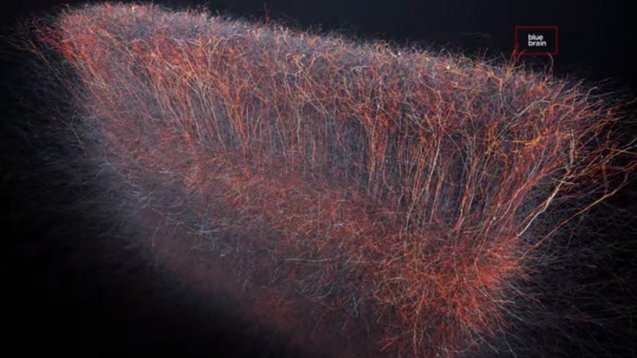 Descubren un universo de hasta 11 dimensiones en las redes cerebrales