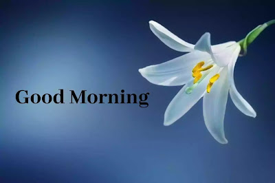 Whatsapp Good Morning Images Free Download