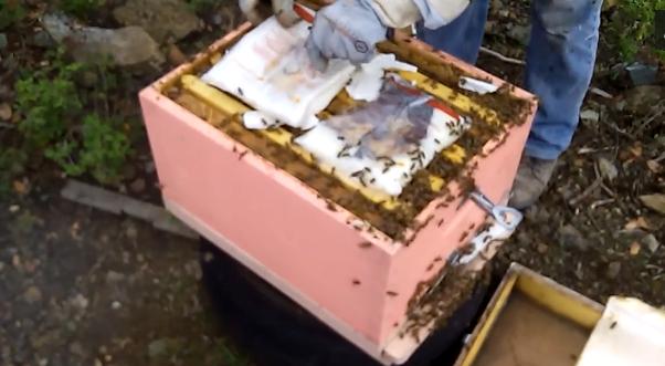 Αρχάριοι μελισσοκόμοι σε επιθεώρηση Φεβρουαρίου: 3ος χρόνος ενασχόλησης και τα μελισσάκια πάνε σφαίρα!!!
