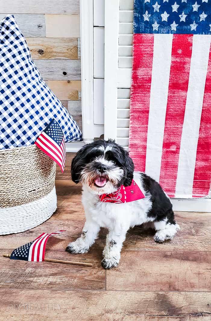 patriotic pup photo shoot