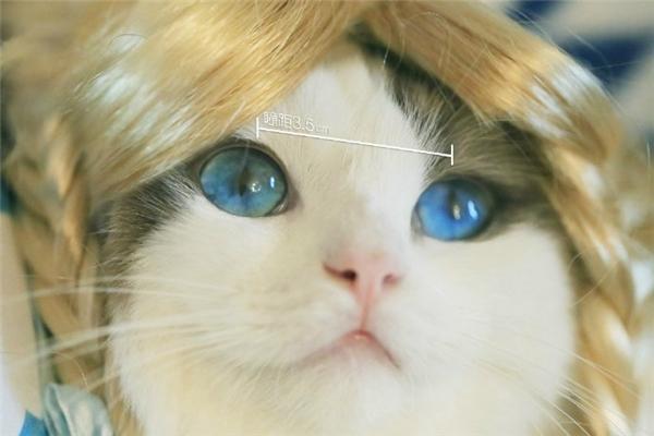 Chàng mèo thích cosplay