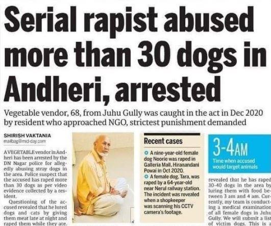 old man arrested for allegedly raping female dog