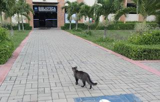 CES/UFCG orienta população de Cuité a não abandonar animais na universidade