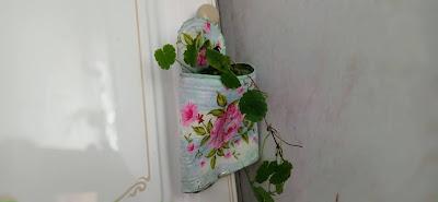 diy-plantas