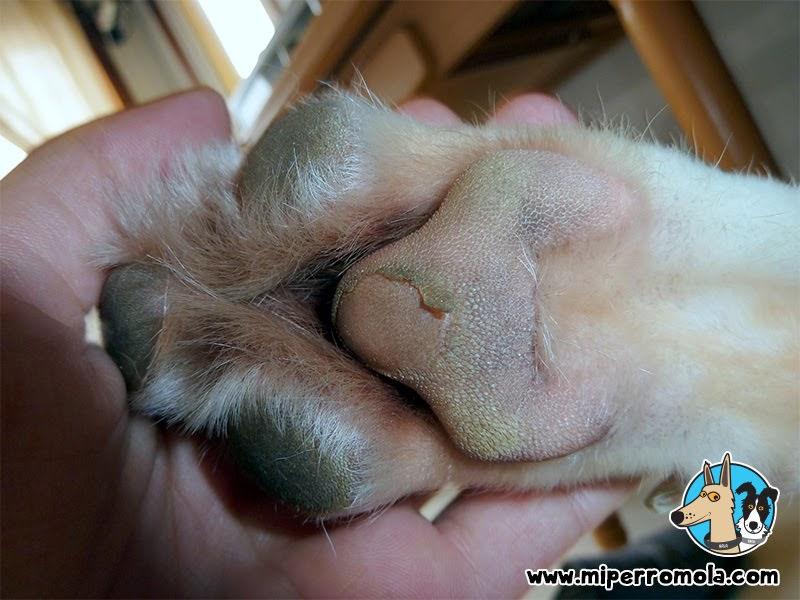 Quemaduras en las almoadillas de un Can de Palleiro