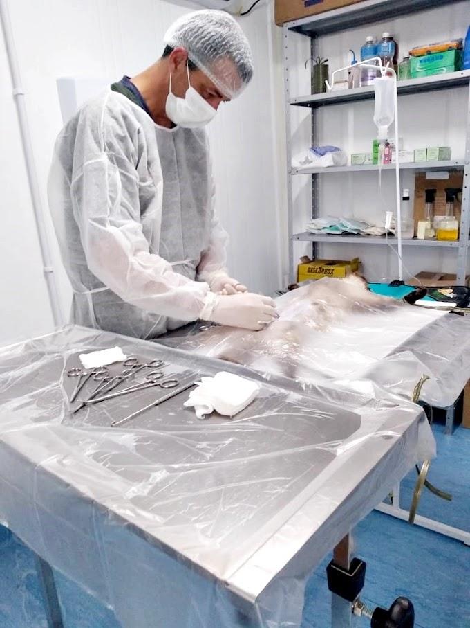 Programa de castrações de animais em Penha retoma atendimentos