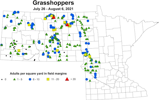 Map of grasshopper population densities on field margins in fields scouted