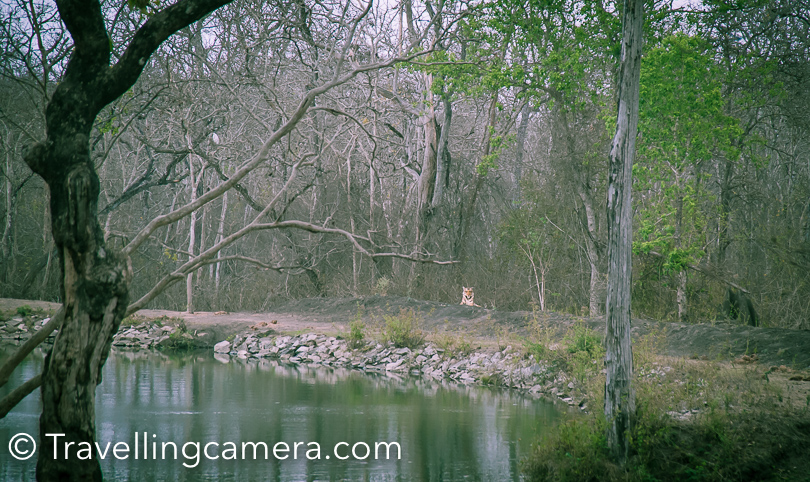 Apart from seeing these 2 leopards, we also saw a tiger sitting around the water tank inside Kabini Wildlife Sanctuary. The very first photograph of this  post shows you the tiger we saw.