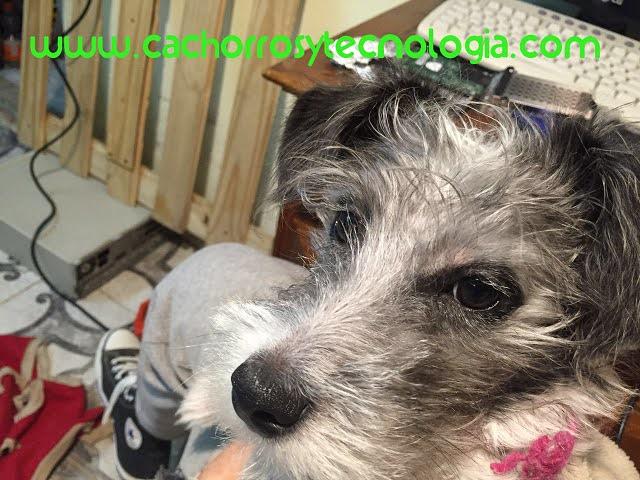 Lo último en tecnología para mascotas perro dog cachorros y tecnologia shurkonrad