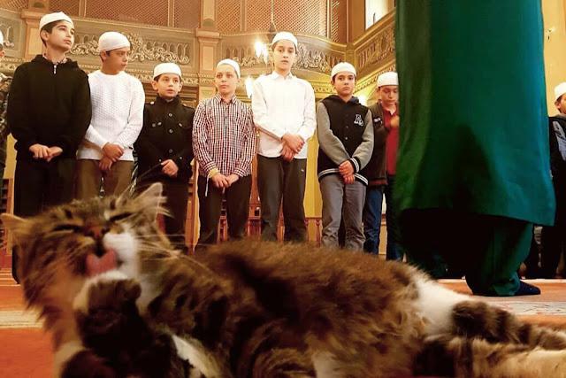 Adakah Sah Solat Jika Kucing Bermain-Main Di Kaki Kita Ketika Solat?