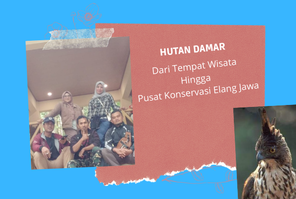 Hutan Damar dari Tempat Wisata Hingga Pusat Konservasi Elang Jawa