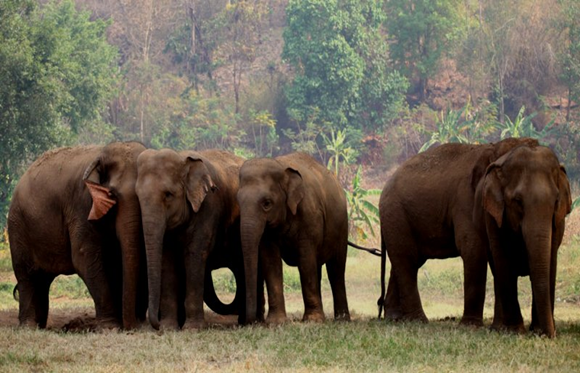 Elefantes protegidos
