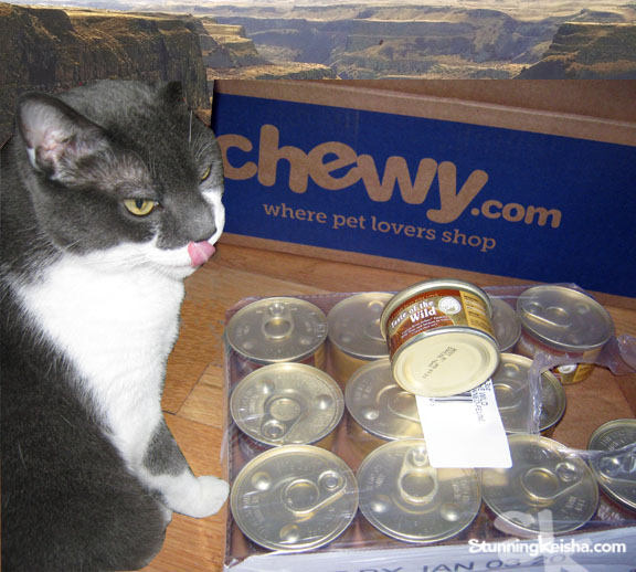 Does Your Cat Crave a Taste of the Wild? #ChewyInfluencer