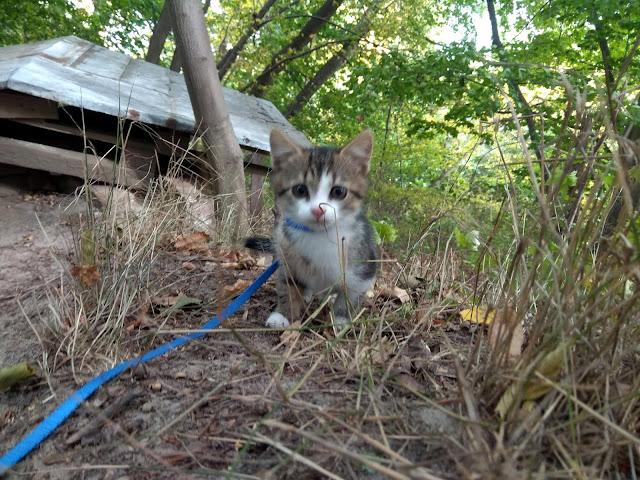 Kot na smyczy - pierwszy sukces