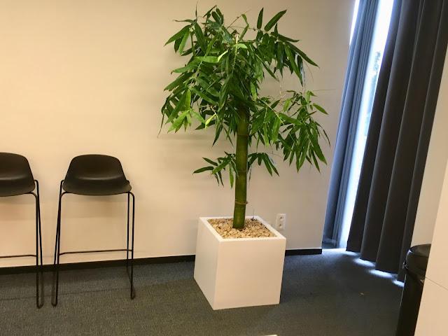 Kamerplanten soorten groot weinig licht verzorgen met bloemen online app een allergie voor buiten met weinig licht die tegen koude kunnen en in zon kunnen staan en donker kunnen staan en weinig water nodig hebben