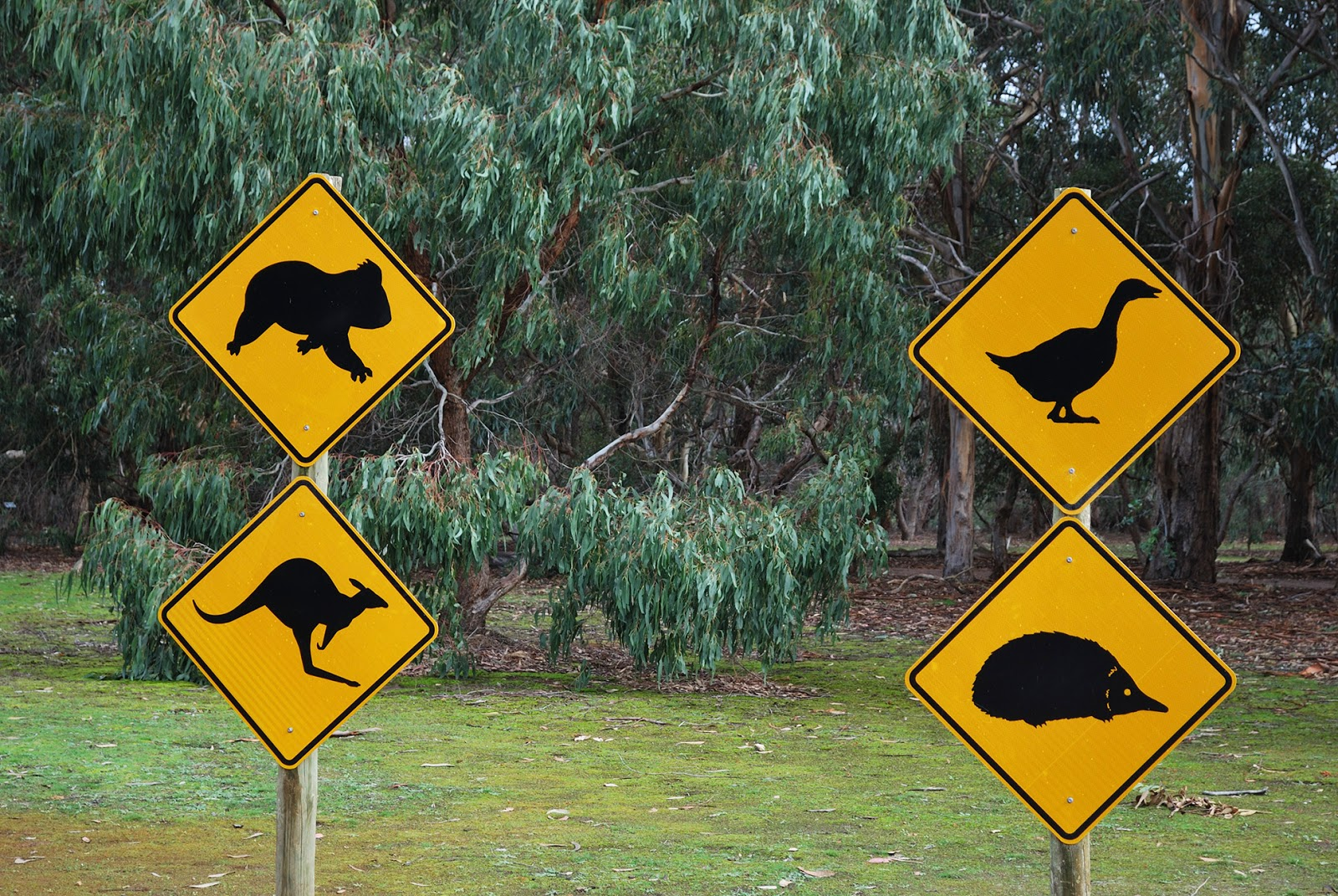 australia animal sign post kangaroo koala emu echidna