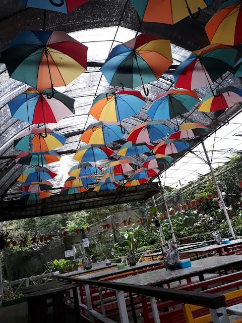 Taman Apple Cameron : Restoran Dalam Taman dengan Sajian Unik dan Istimewa