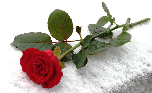 John Blanford bangun tegak dari dingklik di stasiun kereta api sambil melihat ke arah jaru Setangkai Mawar Merah Yang Makara Penanda