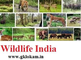 WILD LIFE- India- Geography