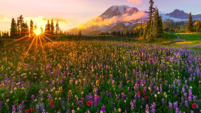foto hermoso paisaje natural campo de flores al atardecer