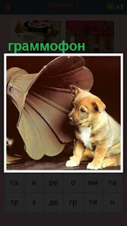 собака рядом с граммофоном, слушает звуки