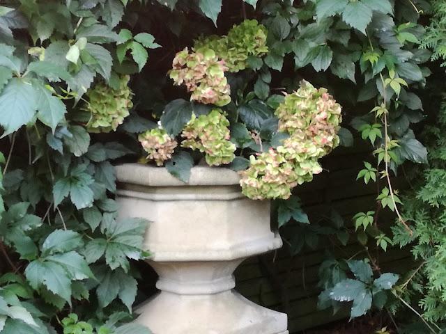 kamienna waza w ogrodzie
