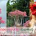 ดอก ทรงต้น และสายพันธุ์ 3 เสน่ห์ มัดใจ คนรักชวนชม
