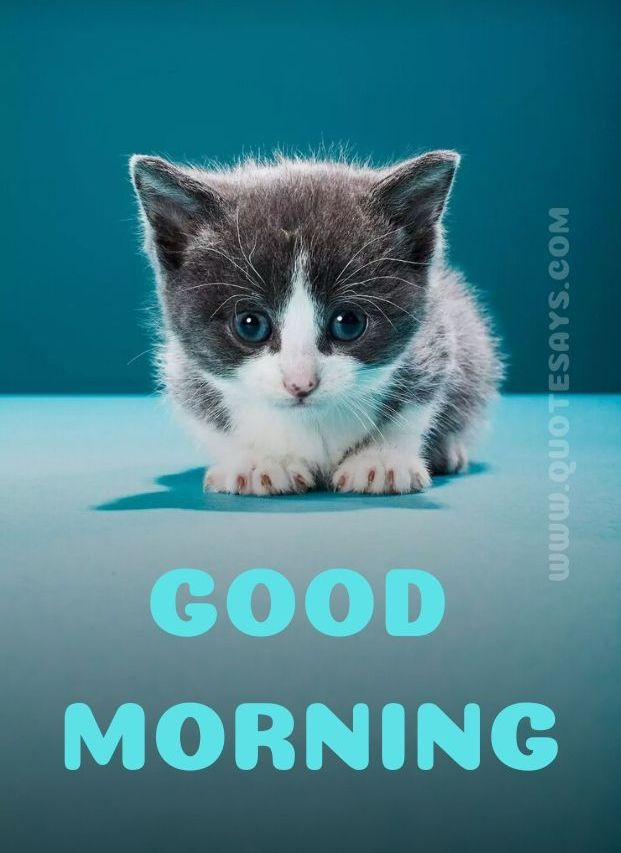 Beautiful Good Morning Cute Cat