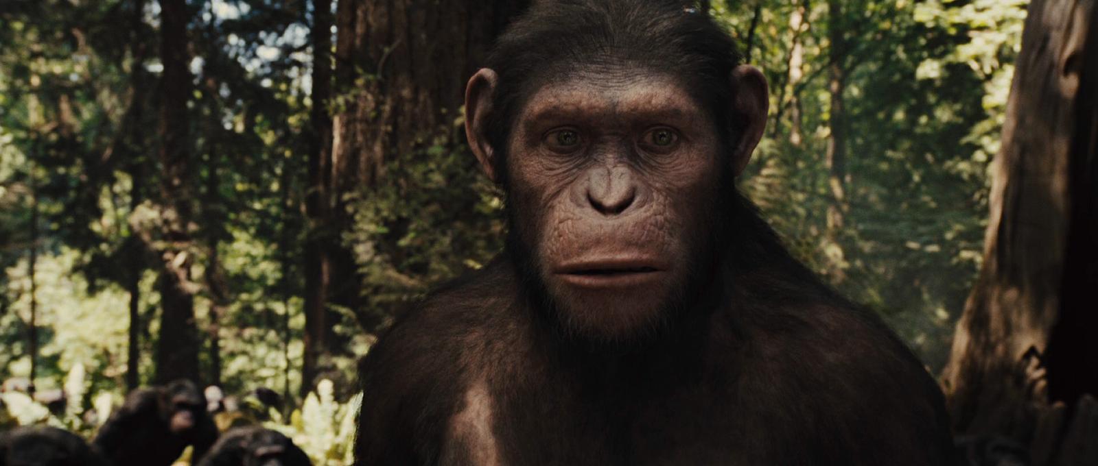 El Planeta de los Simios: (R)Evolución (2011) BRRip 1080p Latino - Ingles captura 4